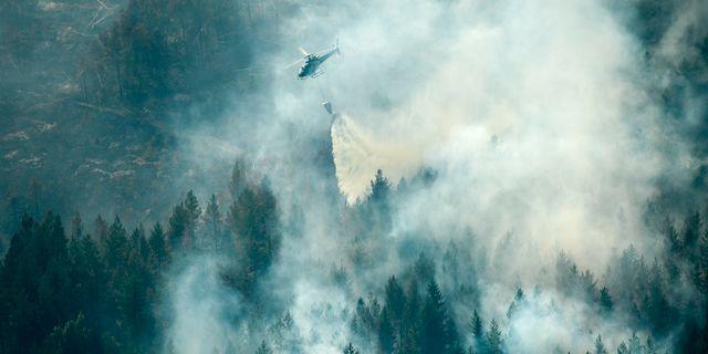 Helikopter kämpar med att släcka branden i Ljusdal. Maja Suslin/TT / TT NYHETSBYRÅN