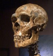 Rekonstruktion av neandertalares skelett. Illustrationsbild Frank Franklin II / AP