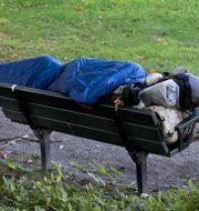 En hemlös person som sover på en parkbänk.  Janerik Henriksson/TT / TT NYHETSBYRÅN