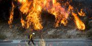 En brandman går vid storaeldslågor i Kalifornien.  Noah Berger / TT NYHETSBYRÅN