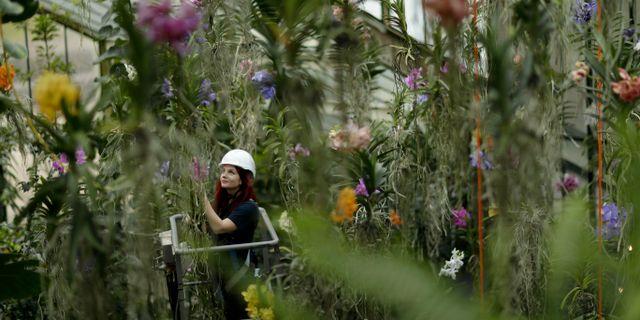 Forskare på Kew Gardens i London ligger bakom studien. Matt Dunham / TT NYHETSBYRÅN
