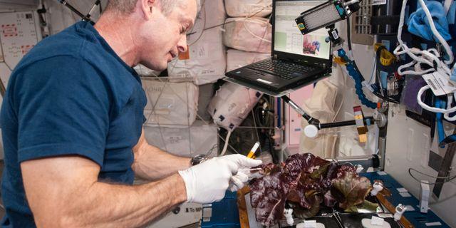 Steve Swanson skördade sallad på ISS 2014. Nasa
