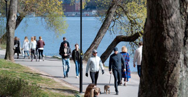 Ingen nedstängning i Sverige. Istället passar stockholmarna på att ta promenader i vårsolen. Bild från 26 april.  Jessica Gow/TT / TT NYHETSBYRÅN