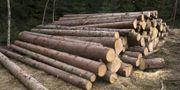 Illustrationsbild av skogsavverkning. Ruud, Vidar / TT NYHETSBYRÅN