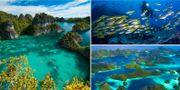 I Raja Ampats turkosa vatten finns fler korallarter än någon annanstans på jorden. Istockphoto / Flickr