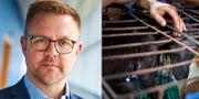 Fredrick Federley/Djurmarknad i kinesiska Yulin TT/AP