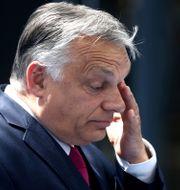 Ungerns president Viktor Orbán. Kenzo Tribouillard / TT NYHETSBYRÅN