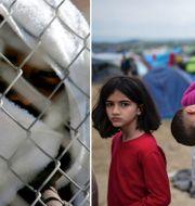 Flyktingar på Samos och i Idomeni.