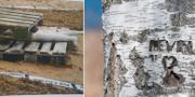 Rekonstruktion från utredningen/Kevins namn på ett träd i närheten av platsen där han dog.  Polisen/TT.