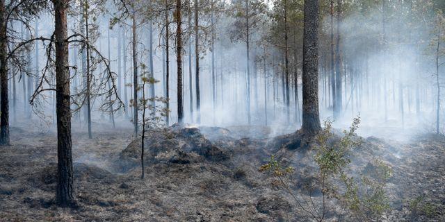 Skogsbranden i Sala under sommaren 2018. Arkivbild. Henrik Montgomery/TT / TT NYHETSBYRÅN