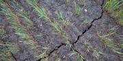 Elva övergripande områden har identifierats som kritiska för att kunna uppnå ett långsiktigt hållbart svenskt jordbruk. Mårten Svensson