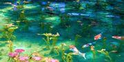 """Den vackra dammen i Japan är nästan helt identisk med tavlorna i sviten """"Näckrosor"""", som målades av Claude Monet 1914-1917. Wikicommons"""