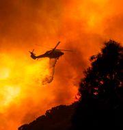 Bild från skogsbranden vid Lake Hughes i Kalifornien i veckan. Ringo H.W. Chiu / TT NYHETSBYRÅN