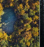 Hoia Baciu-skogen i Rumänien kallas Transylvaniens Bermudatriangel. Getty/Istock