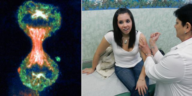 En livmoderhalscancer-cell som håller på att dela sig/17-åriga Nicole Giacopelli tar vaccin mot livmoderhalscancer.