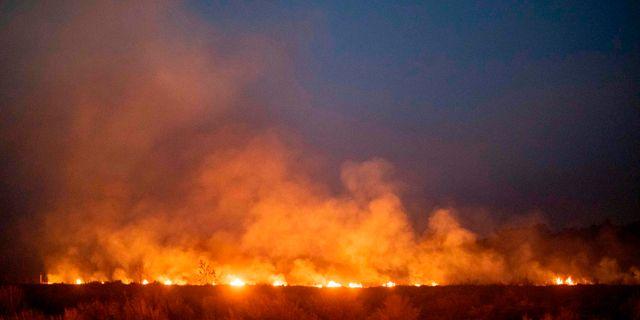 En brand som rasar i Nova Santa Helena i södra Amazonas. JOAO LAET / AFP