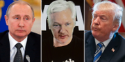 Rysslands president Vladimir Putin, Wikileaks grundare Julian Assange och USA:s president Donald Trump.  TT