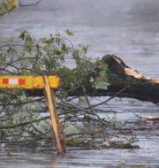 Träd föll i New Brunswick i Kanada till följd av Dorian. Marc Grandmaison / TT NYHETSBYRÅN