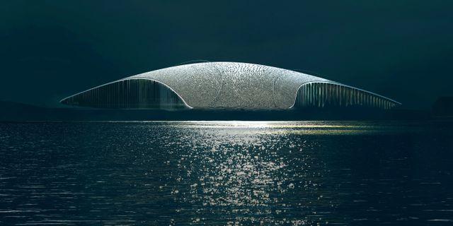 """The Whale beskrivs som en """"löjligt häftig ny valskådningsattraktion"""" av brittiska The Sun. MIR/Dorte Mandrup"""