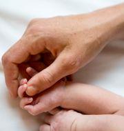 Bebishänder och vuxenhand. Christine Olsson/TT / TT NYHETSBYRÅN