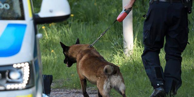 Polisens hundar sökte av fyndplatsen Niklas Lindahl / TT / TT NYHETSBYRÅN