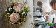 För femtonde året i rad har White Guide utsett Sveriges bästa restauranger. Den bästa gastronomiska upplevelsen hittar man enligt dem på Fäviken Magasinet i Järpen utanför Åre. Fäviken Magasinet
