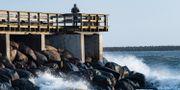 En man spanar ut över Östersjön från Ystad/arkiv.  Johan Nilsson/TT / TT NYHETSBYRÅN