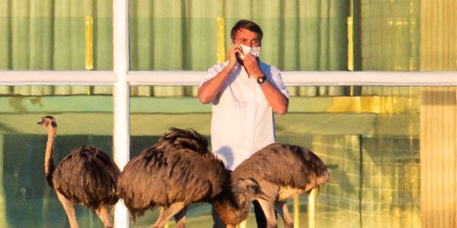 Jair Bolsonaro talar i telefon utanför presidentpalatset i Brasilia. Eraldo Peres / TT NYHETSBYRÅN