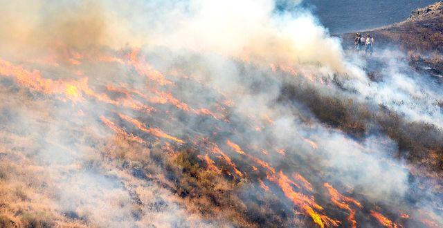 Brand i delstaten Washington. August Frank / TT NYHETSBYRÅN