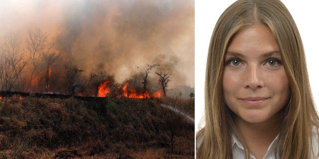 Bränder i Amazonas/Louise Meijer. TT/riksdagen