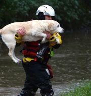 Räddningstjänster kämpar mot vattenflödena i Storbritannien. GEOFF CADDICK / AFP