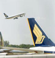 Singapore Airlines-plan ED WRAY / TT NYHETSBYRÅN