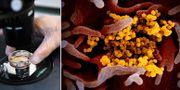 Coronaviruset syns som gula partiklar i ett prov som isolerats från en amerikansk patient. TT