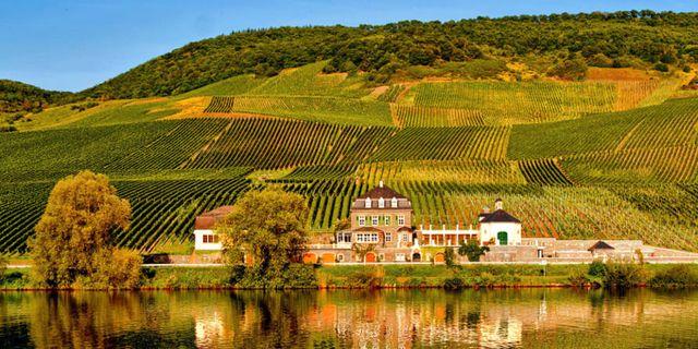 Den tyska vingården Weingut Dr. Loosen är en av Europas fem bästa vingårdar, enligt World's Best Vineyard Awards. Weingut Dr. Loosen/World's Best Vineyards