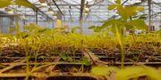 Lantmännen och dess ägare driver utvecklingen av framtidens jordbruk. Lantmännen