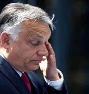 Ungerns premiärminister Viktor Orbán.  Kenzo Tribouillard / TT NYHETSBYRÅN