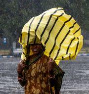 Indisk kvinna skyddar sig från regnet efter cyklonen Bulbul. Bikas Das / TT NYHETSBYRÅN