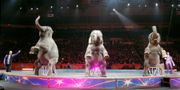 Cirkuselefanter på en amerikansk cirkus 2016 Bill Sikes / TT / NTB Scanpix