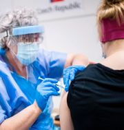 Vaccinering.  TT