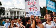 Demonstranter som protesterar mot ändringar i Daca-programmet.  Jacquelyn Martin / TT NYHETSBYRÅN/ NTB Scanpix