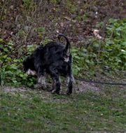 Illustrationsbild av hund som rastas i grönområde. Janerik Henriksson/TT / TT NYHETSBYRÅN