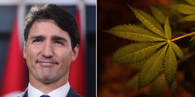 Justin Trudeau. TT