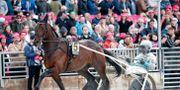 Propulision är en av de svenska hästarna i årets Prix d- Amerique Christine Olsson/TT / TT NYHETSBYRÅN