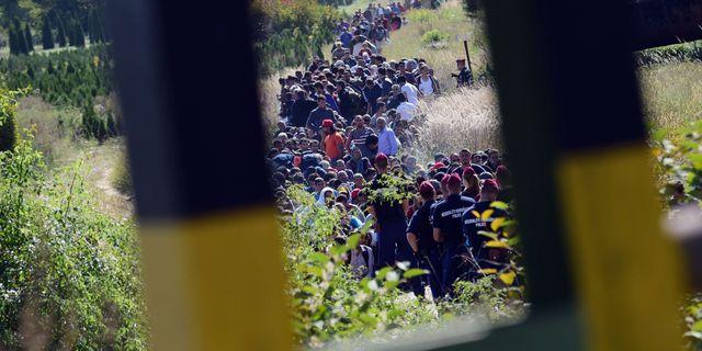 Gränsen mellan Ungern och Kroatien i september 2015.  ATTILA KISBENEDEK / AFP