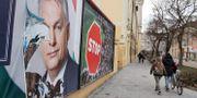 Premiärminister Viktor Orbán på valaffischer i den ungerska staden Szombathely. Jessica Gow/TT / TT NYHETSBYRÅN