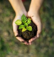 Illustrationsbild. Shutterstock