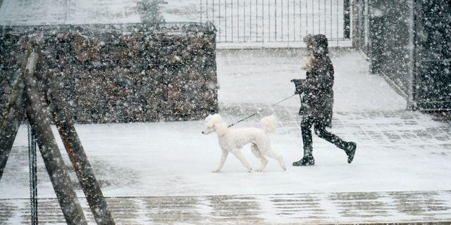Ymnigt snöfall i Malmö. Arkivbild. Johan Nilsson/TT / TT NYHETSBYRÅN