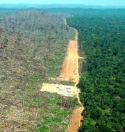 Bild från Greenpeace från Amazonas.  ALBERTO CESAR / GREENPEACE