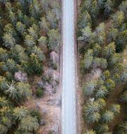 En landsväg mellan granarna i en skog i norra Uppland. Arkivbild. Fredrik Sandberg/TT / TT NYHETSBYRÅN