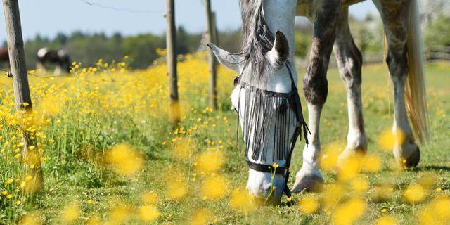 Häst på bete. Felix Kaestle / TT NYHETSBYRÅN